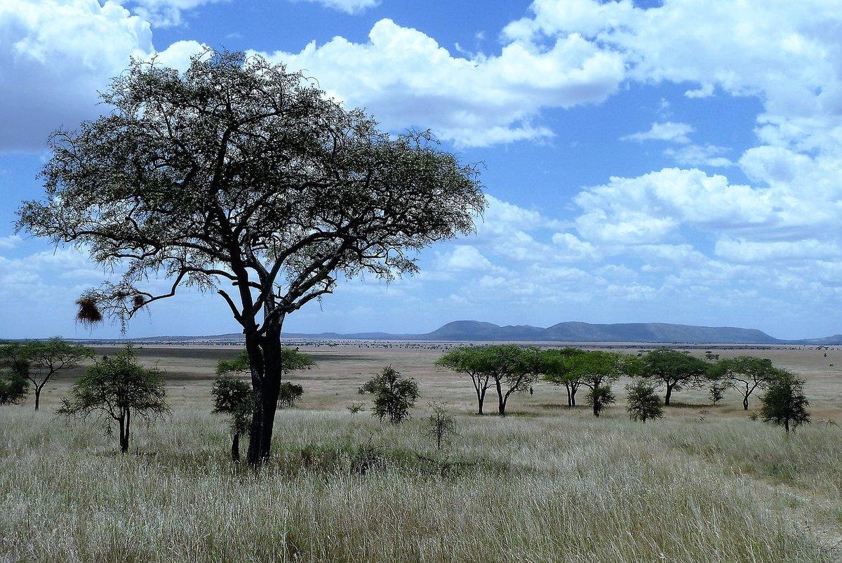средний деласерас африка фото время весеннего цветения