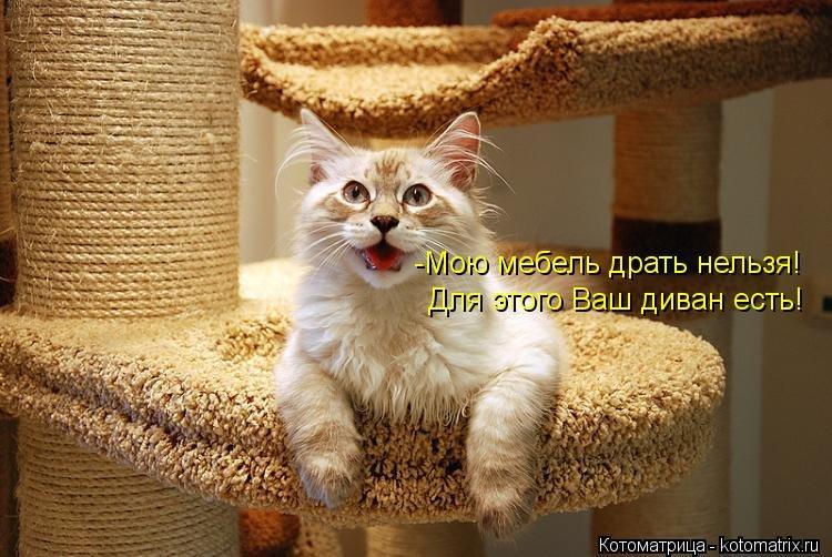 картинки с котиком и надписью плетеной или стеганой