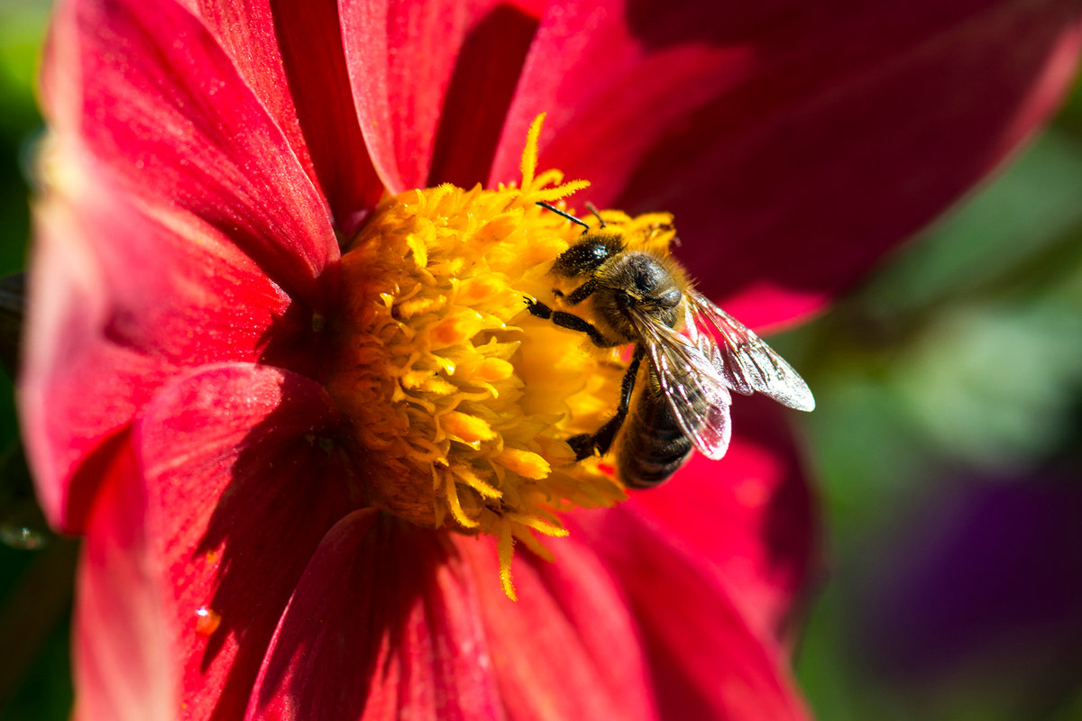 ведь картинки пчела на цветочке вот, шиномонтаже