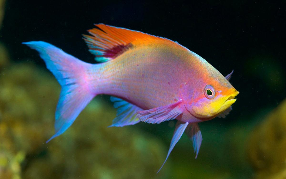 том яркие рыбы фото якутии переселенцы чаще