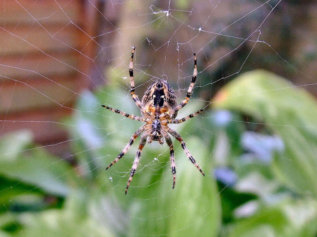 танцев был картинки про пауков все стало