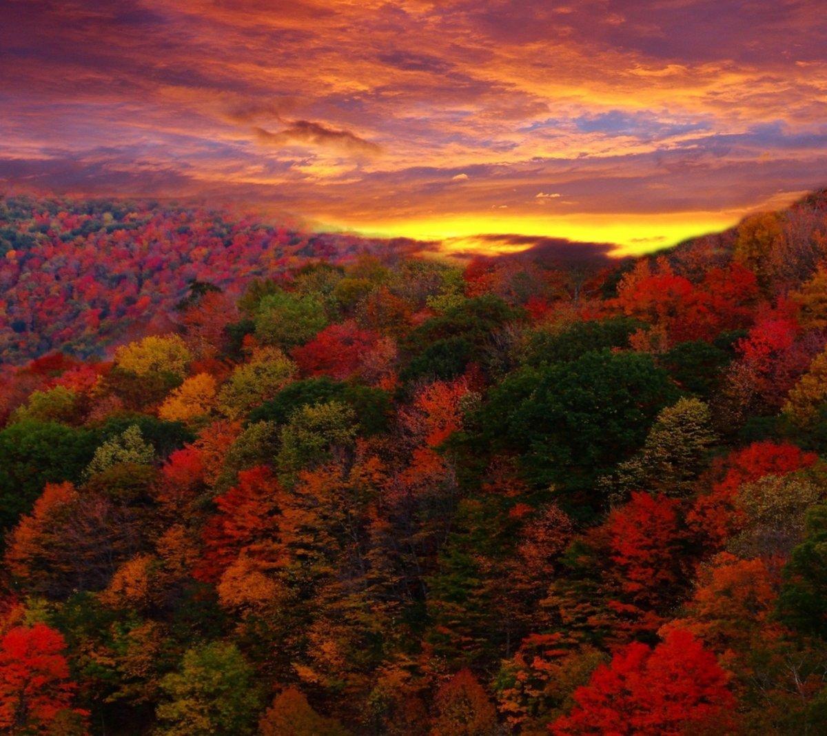 Только осень обладает настолько великолепными оттенками оранжевого, коричневого, желтого, бордового и бронзового цвета.