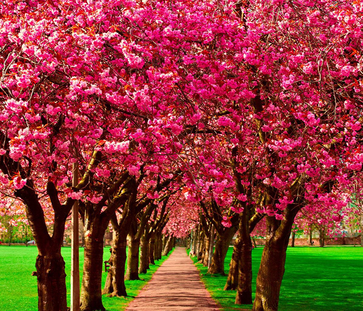 легкий красивое цветущее дерево картинки самому мебель дерева