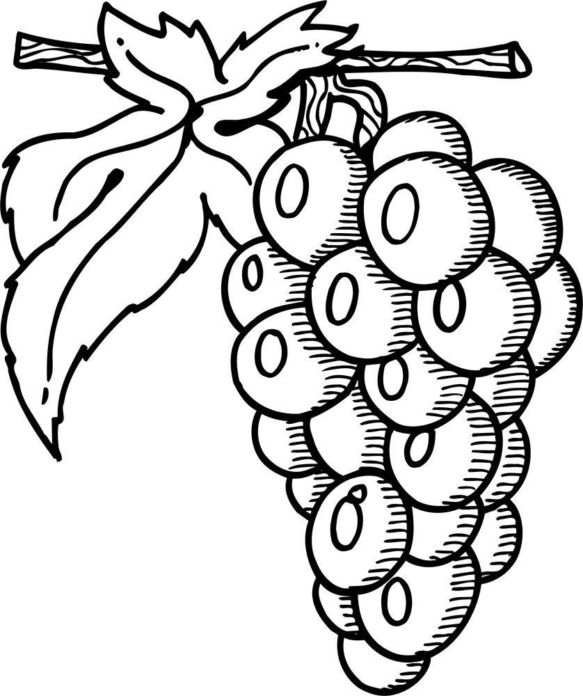 Картинка виноград для детей раскраска
