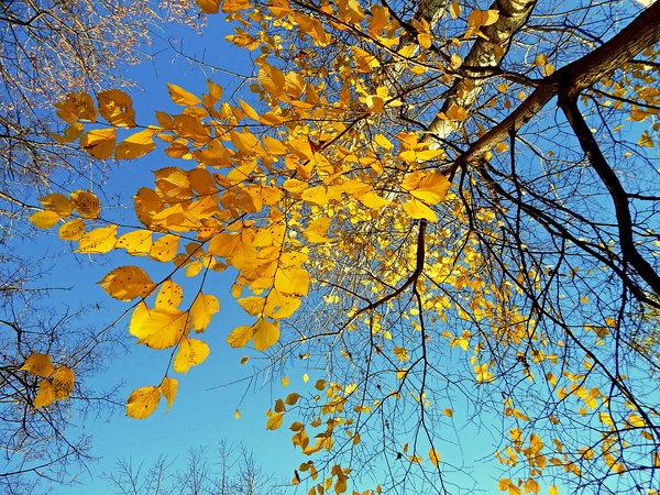 Осенние кружева