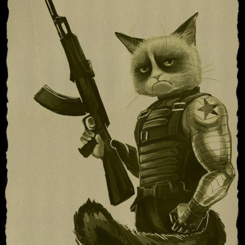 Кот с пистолетом картинка