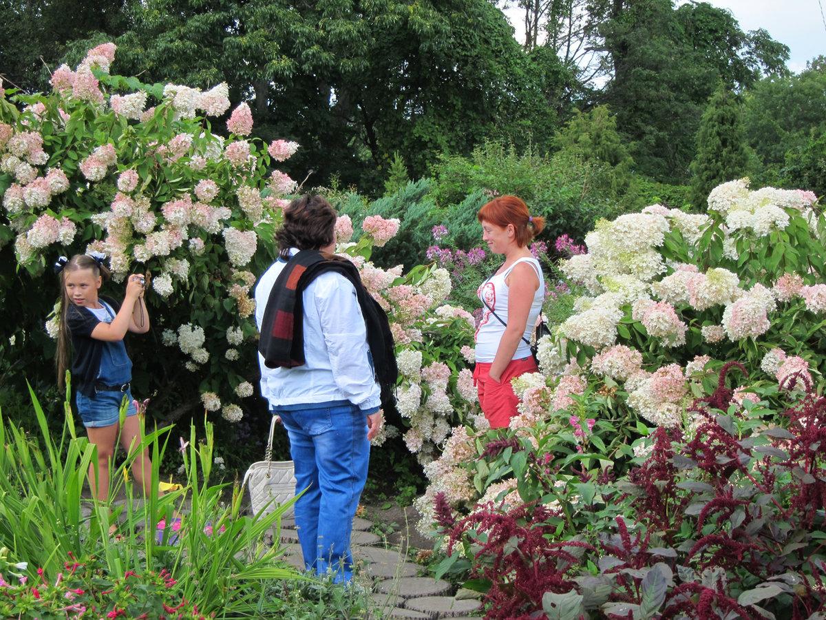 Купить цветы и кустарники ботанический сад владивосток, сделать букет