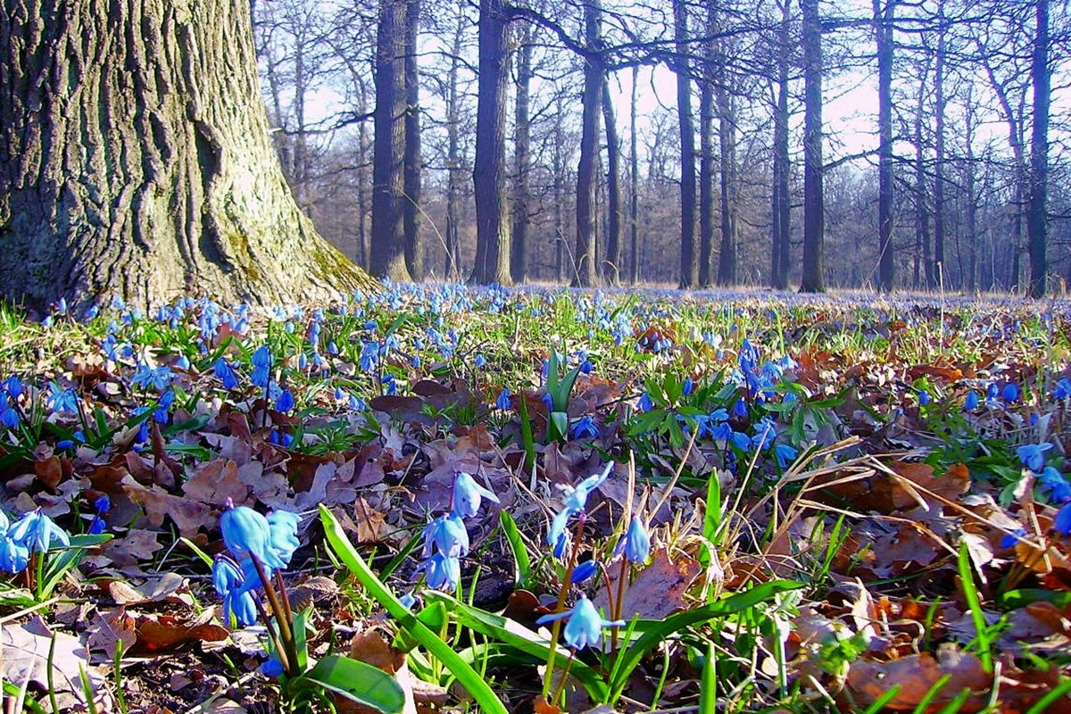 Картинки, весна картинки природа в лесу