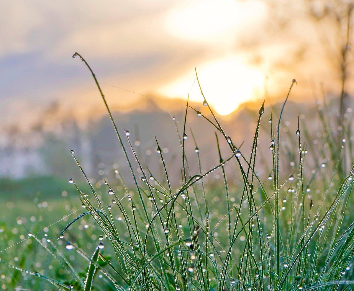 это картинки лето природа роса фаркоп тсу