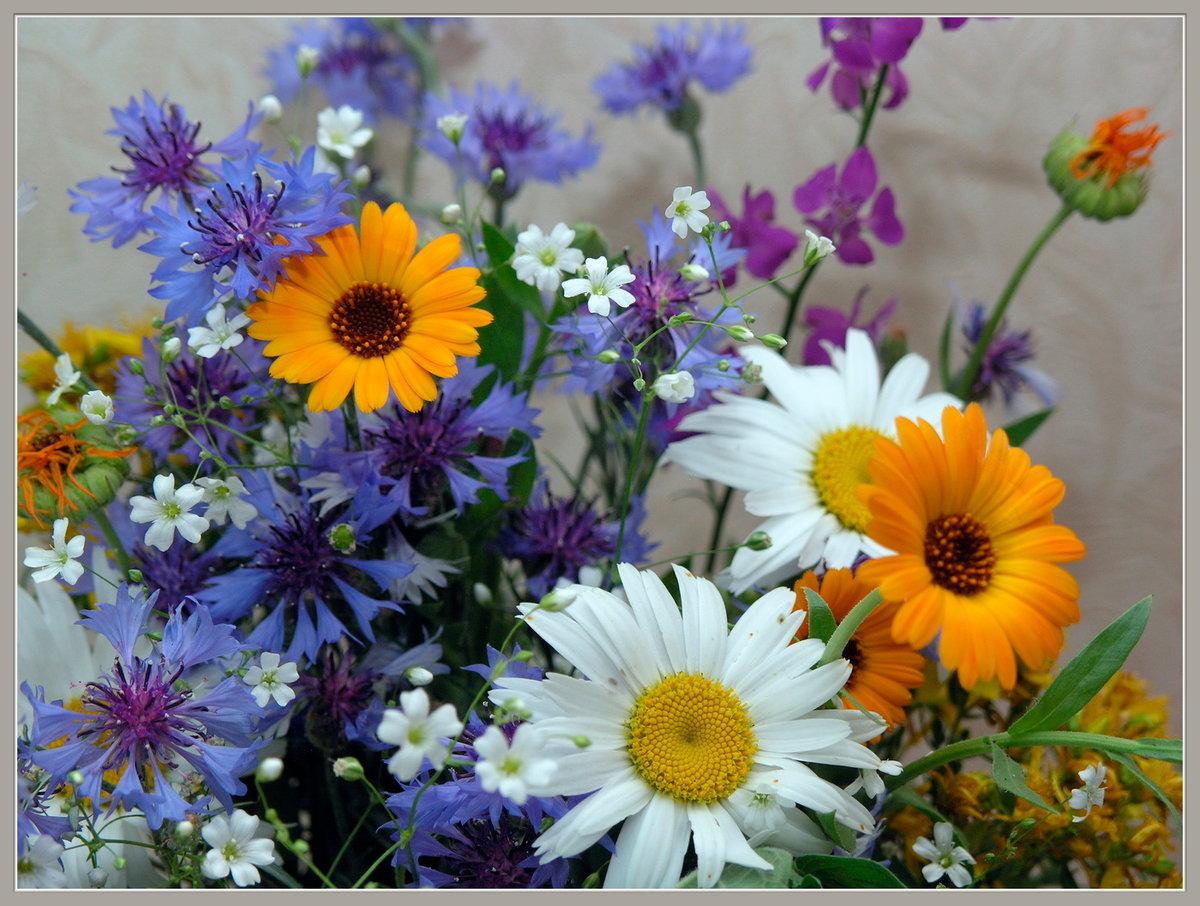 Цветов, бабушкин букет фото