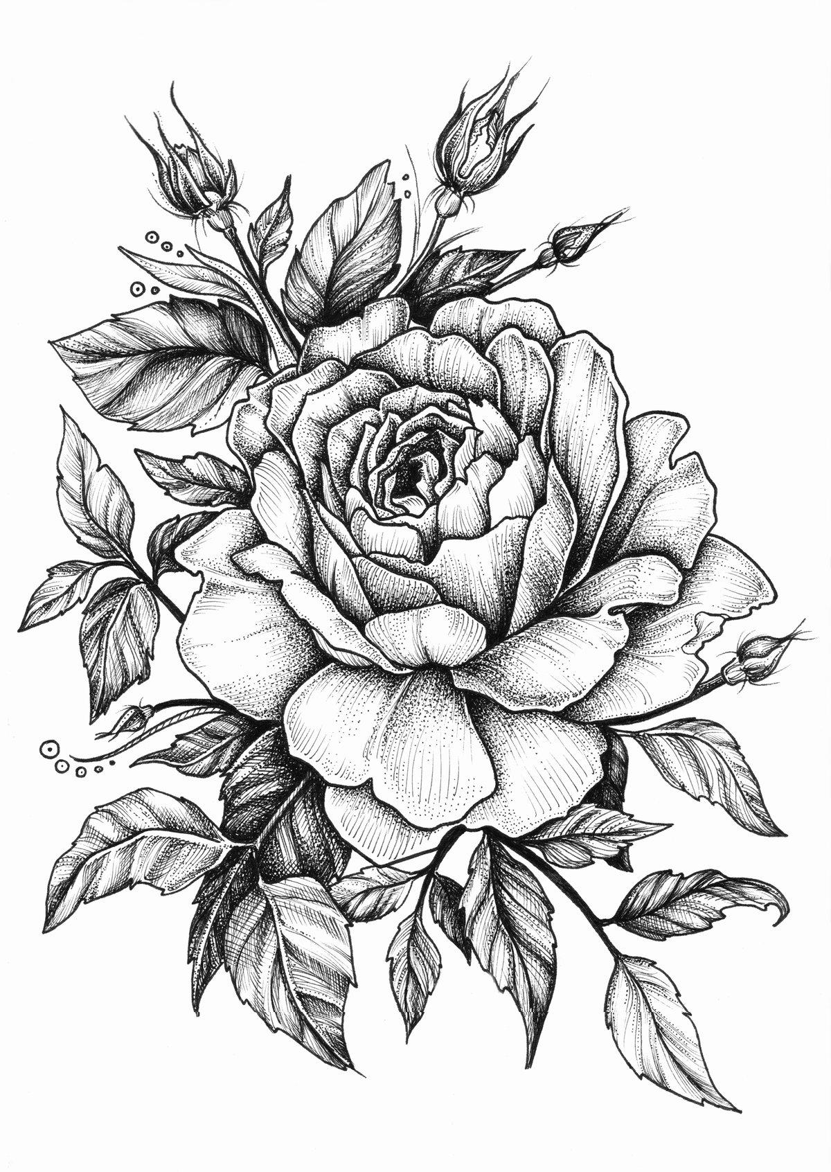 Картинка, картинки розы черно белые тату