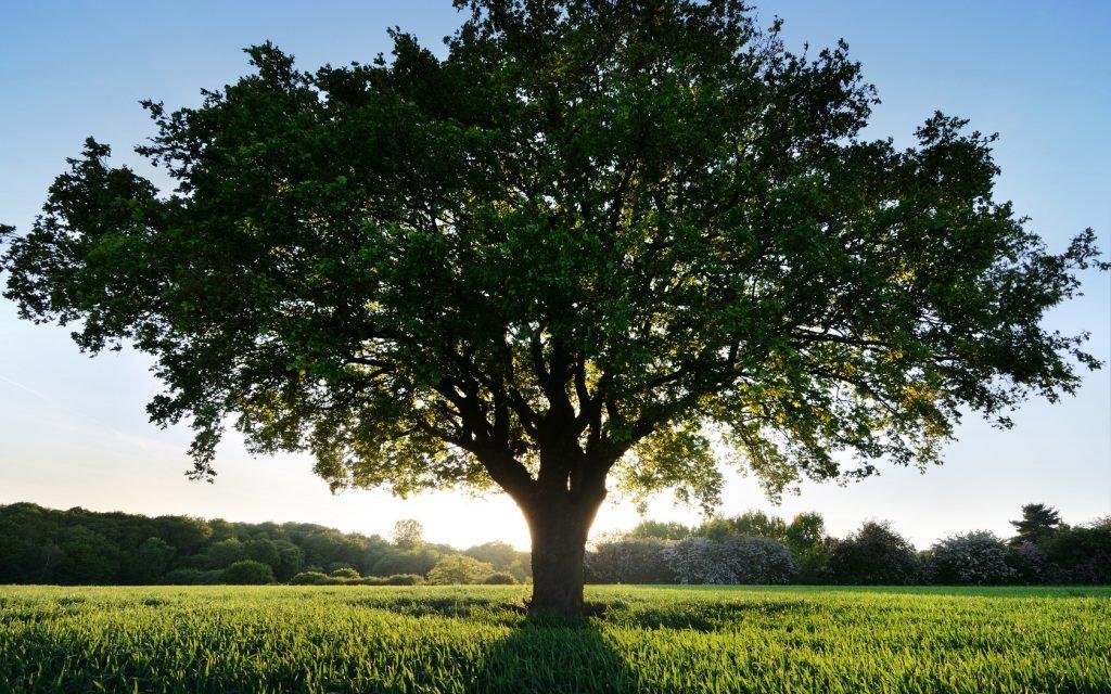 Деревья фото и открытки