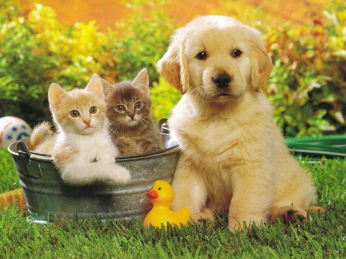 Прикольная открытка с животными