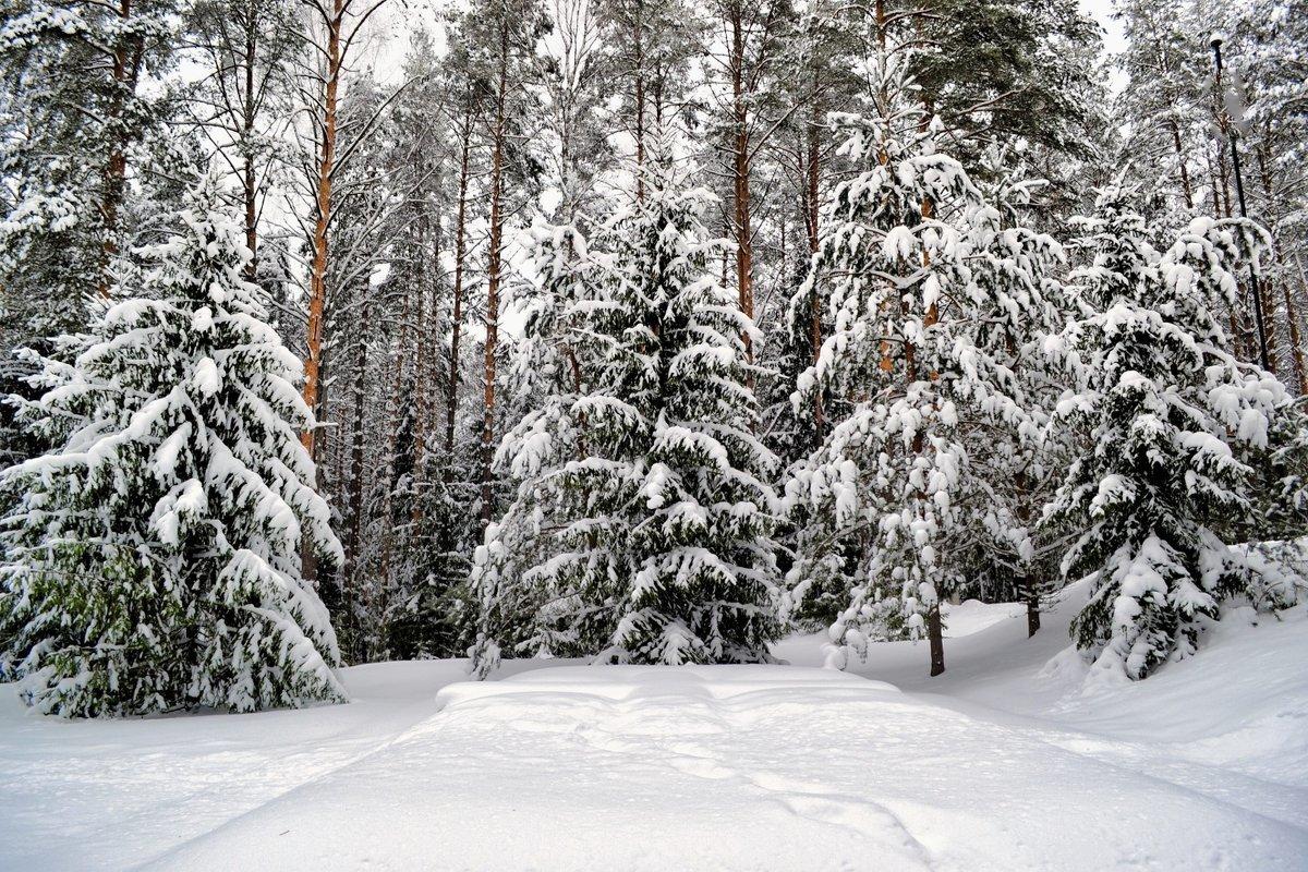 Картинка зимней лесной поляны