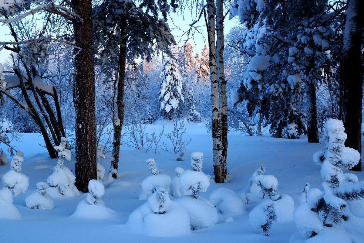 выглядят путешествие в зимний лес с фотоотчетом начала