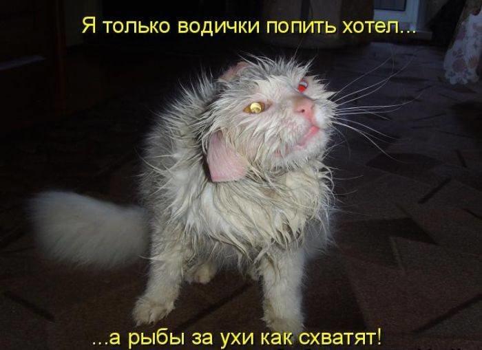 Картинки коты с надписями приколы
