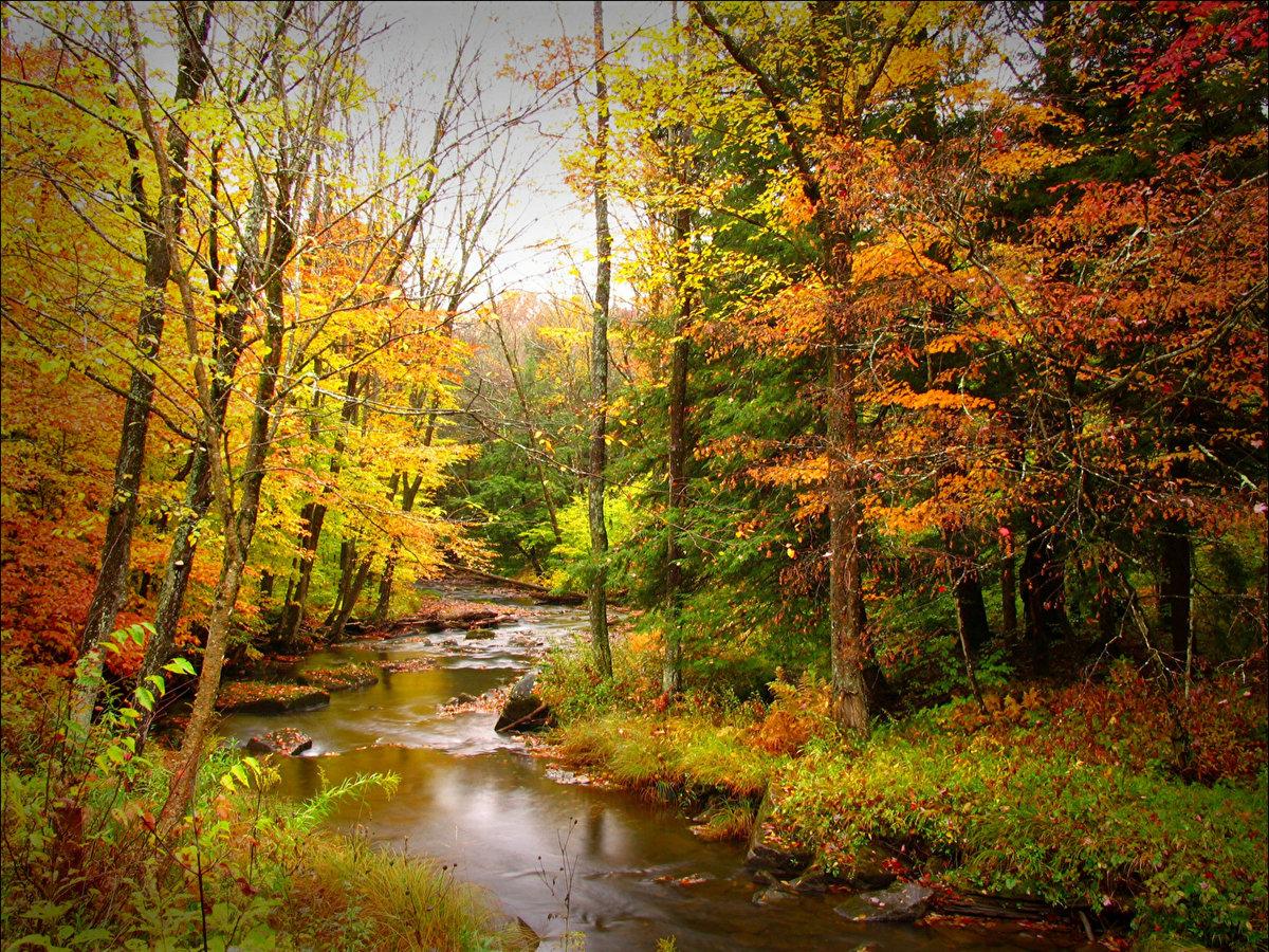 Прелесть осеннего леса