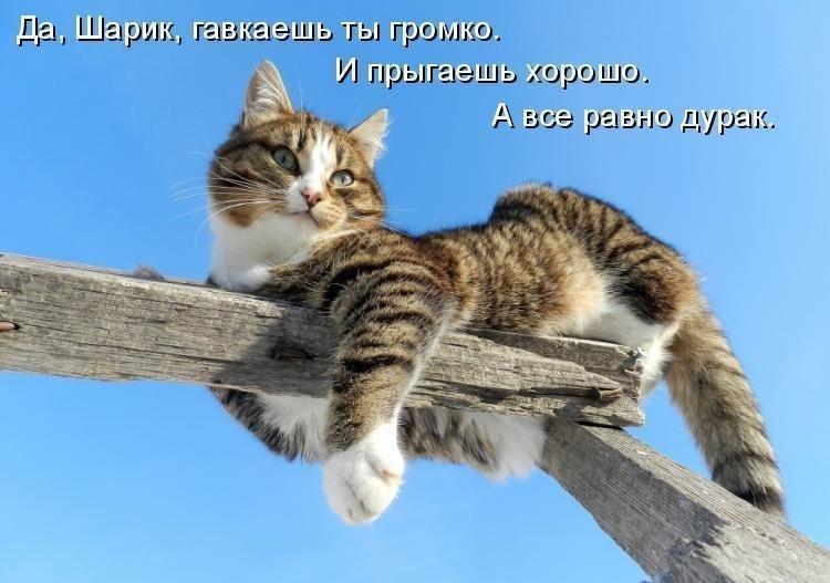 Новые картинки с котами и надписями, лет девочке картинки