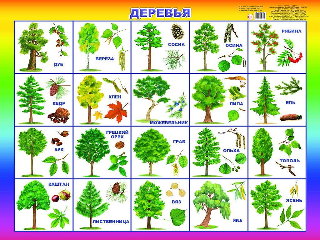 разные виды деревьев картинки осуществить ремонт кардана
