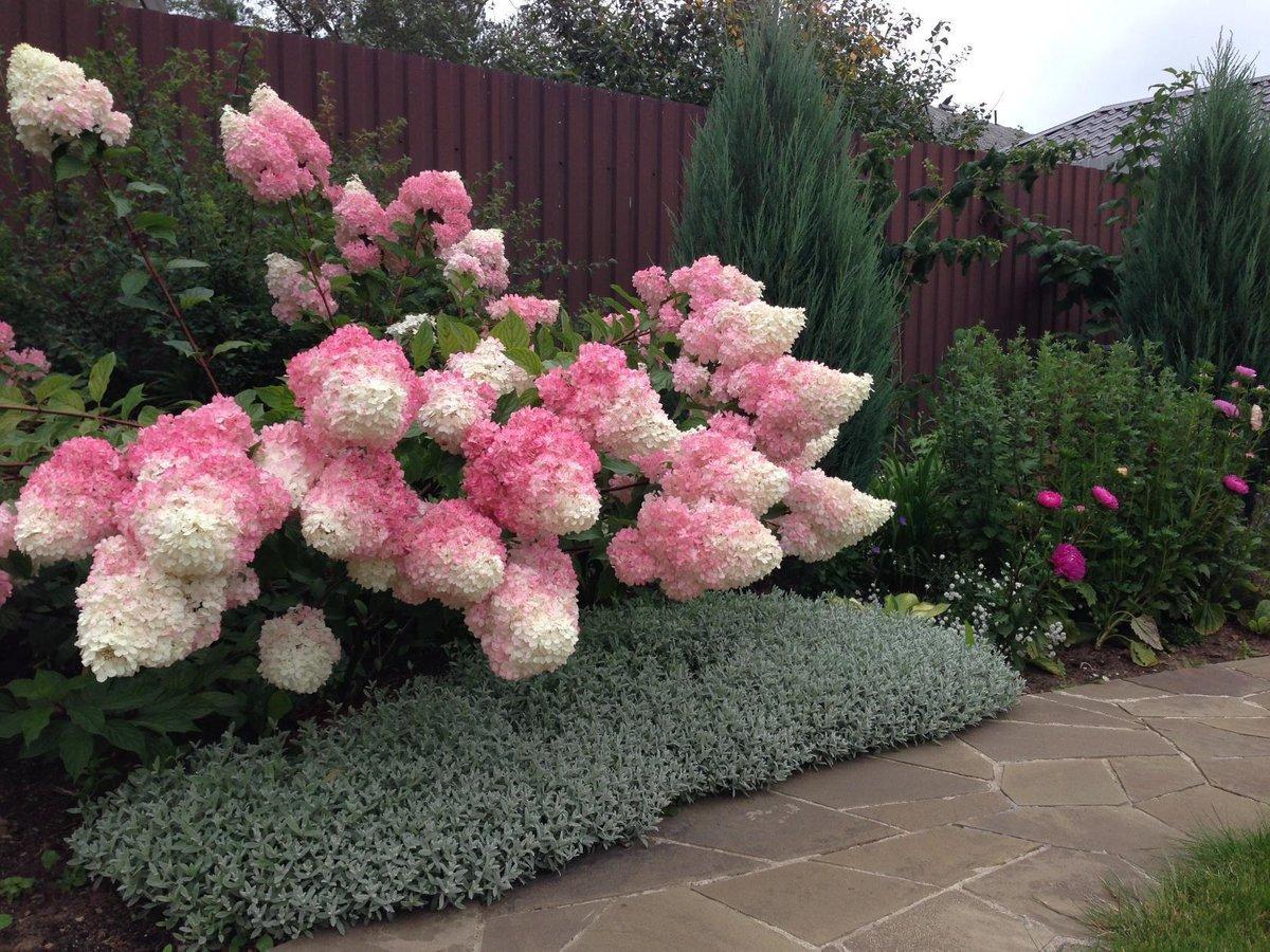Цветы в сад на заказ