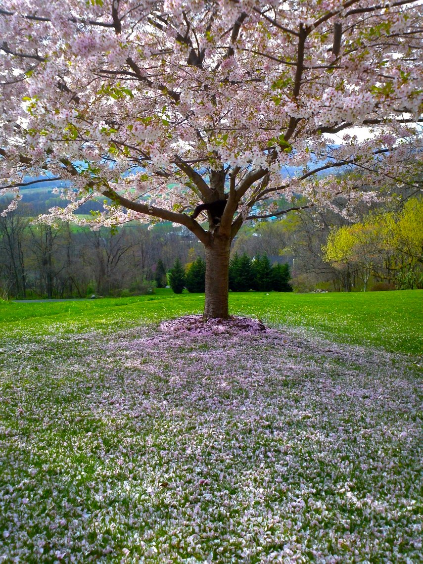 фотки с природой весна свои фото