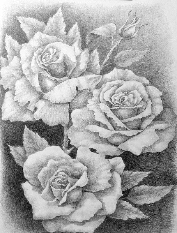 Розы на открытку карандашом