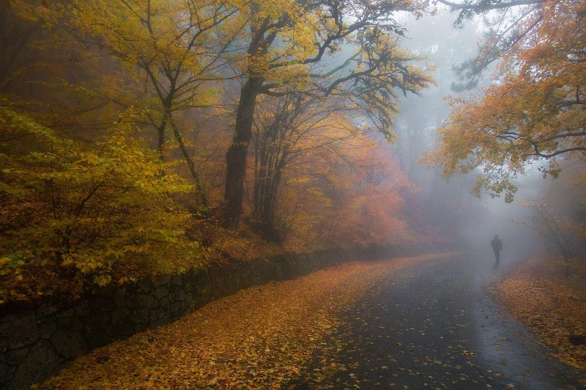 Осенний туман в парке