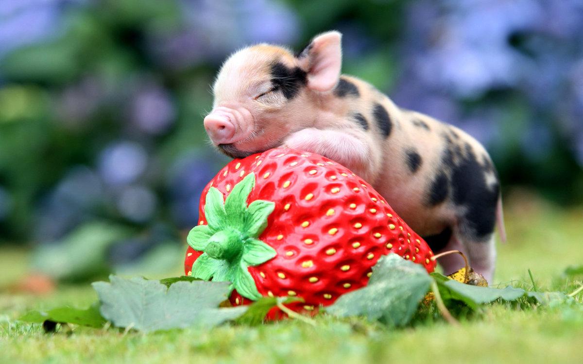Днем рождением, картинки домашние животные смешные