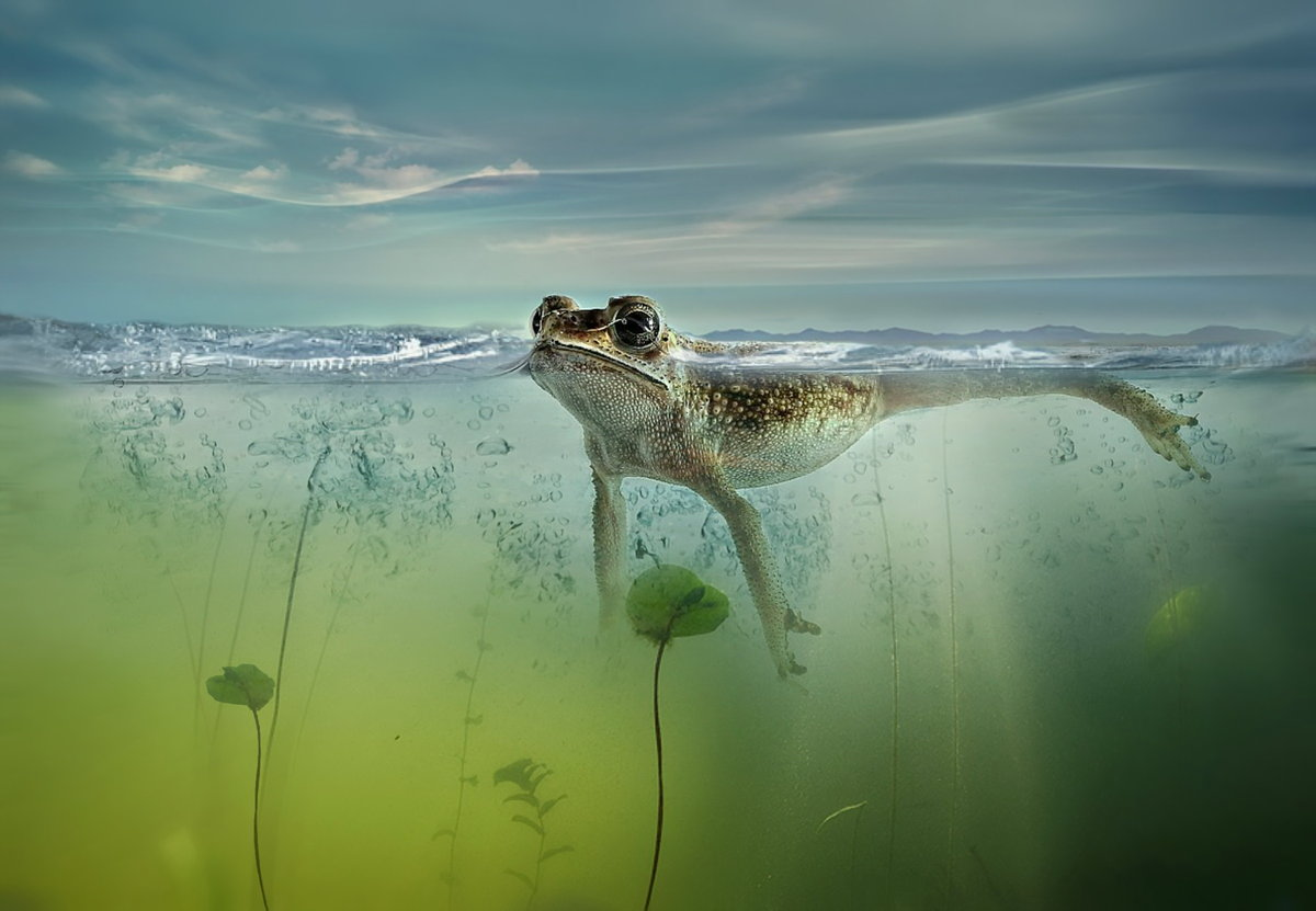 удовольствием картинки они живут в воде любимая