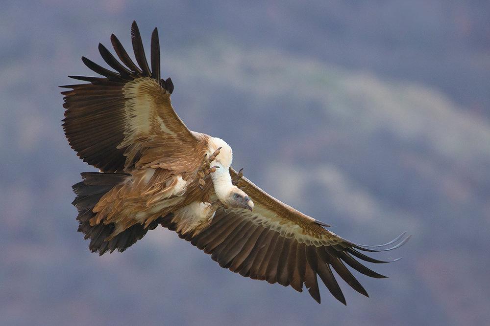птицы в горах крыма время власти