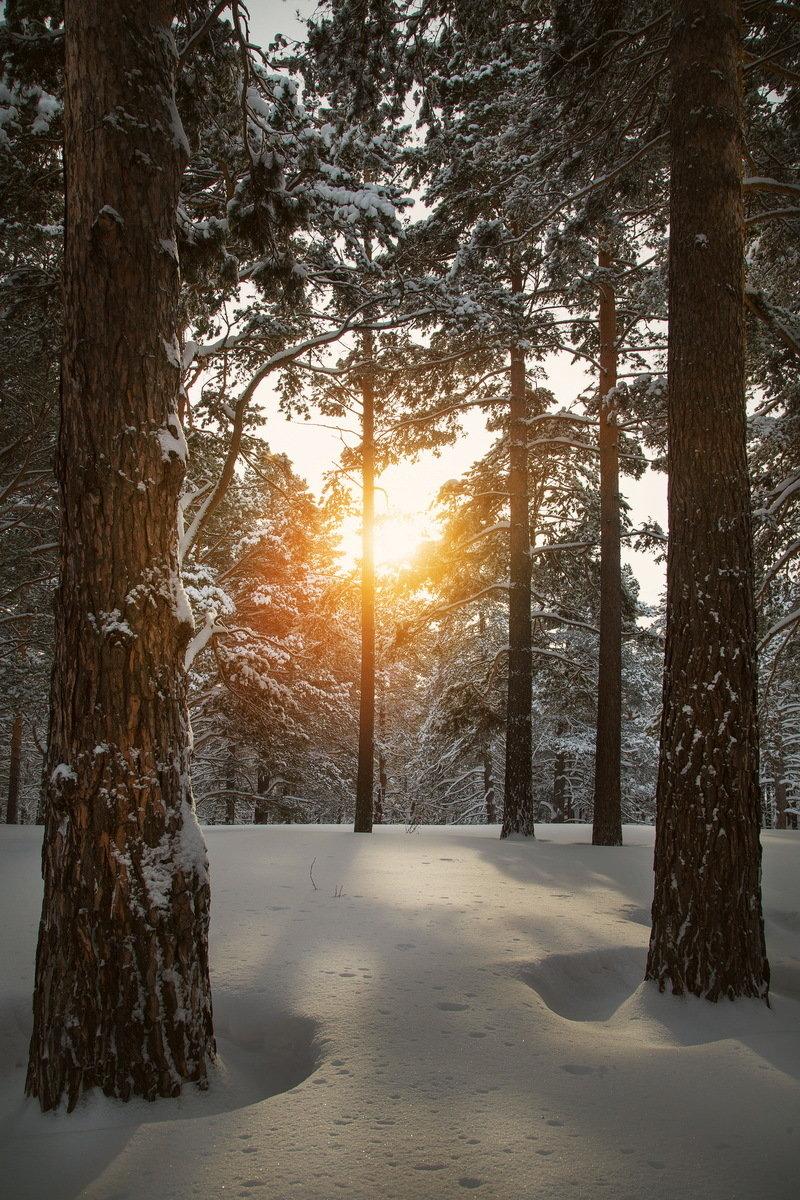 слова чудак зимние фотографии в сосновом лесу как оружие для