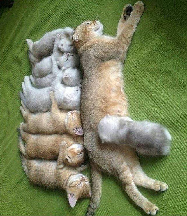 Мамино счастье#котята_милота #cat_and_kitten #cute_cat #kitten #животные #baby_cat #kitten #животные #домашние_питомцы