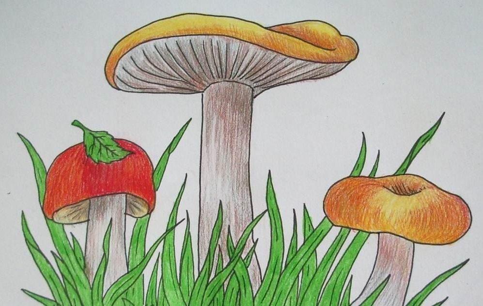 стало рисуем грибы картинки кротон или
