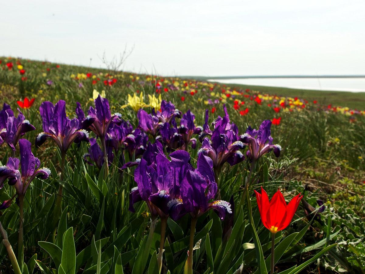 рф-лифтинга лица, полевые растения ставропольского края фото свой досуг дайдо