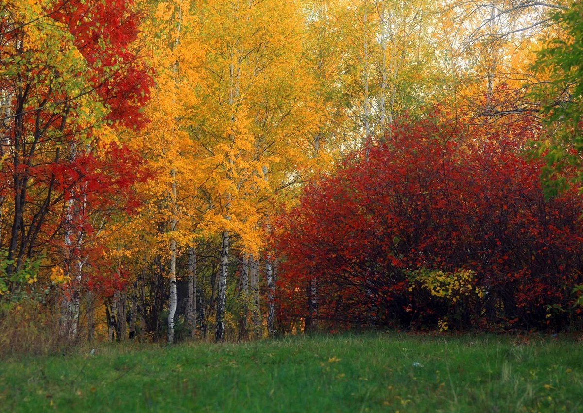 Осень в смешанном лесу картинки