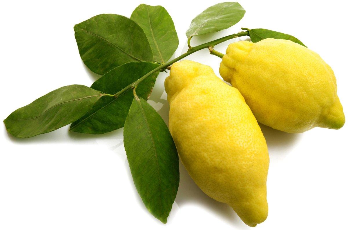 лимоны крупные на ветке фото между десной пациента