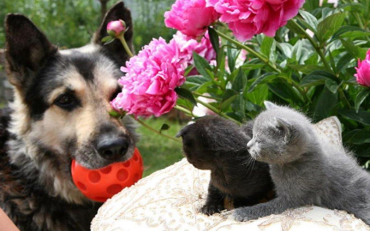 Картинки собаки кошки цветы