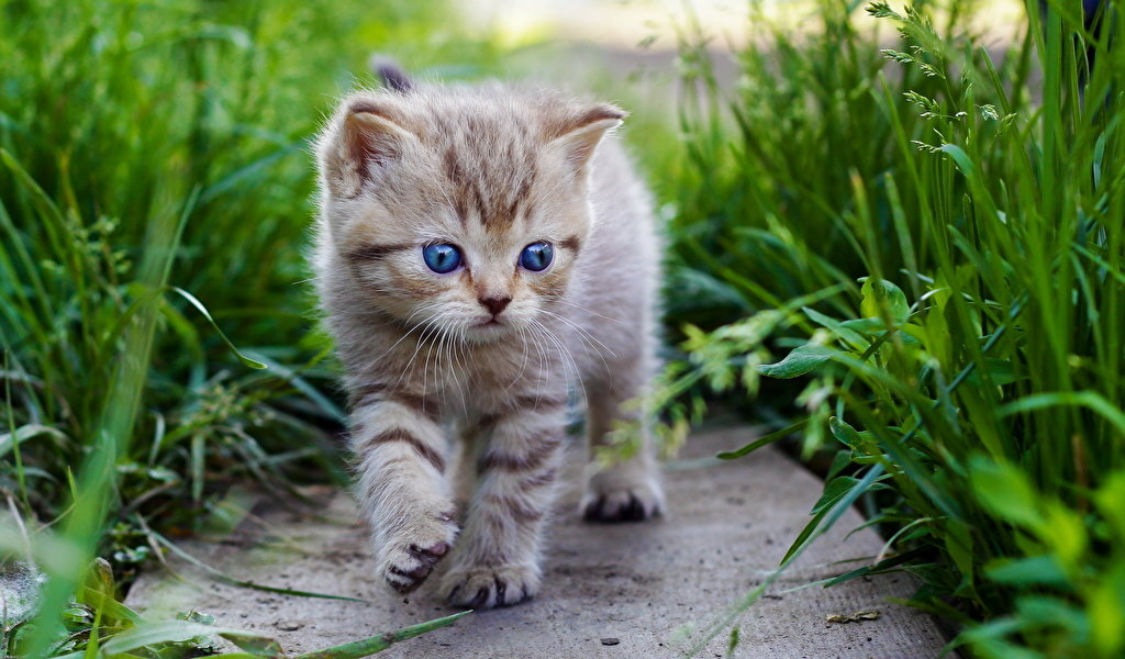 Прекрасно открытки, картинки про кошки