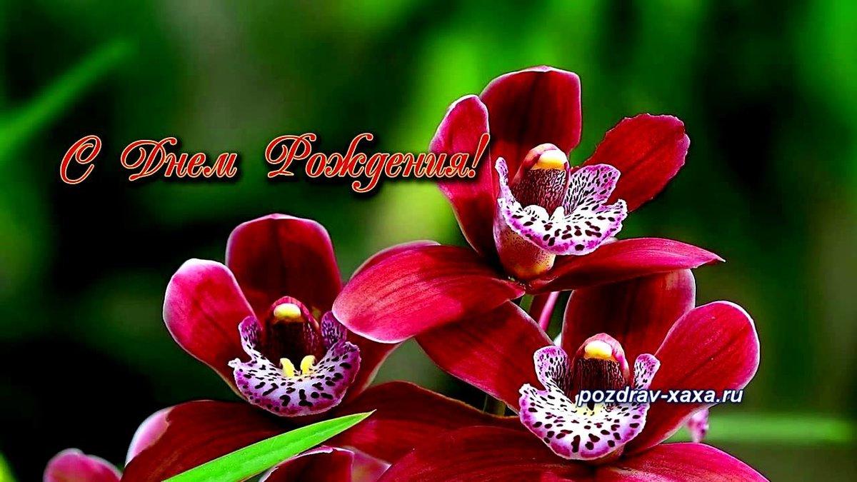 Картинки, открытки с днем рождения орхидеи женщине красивые