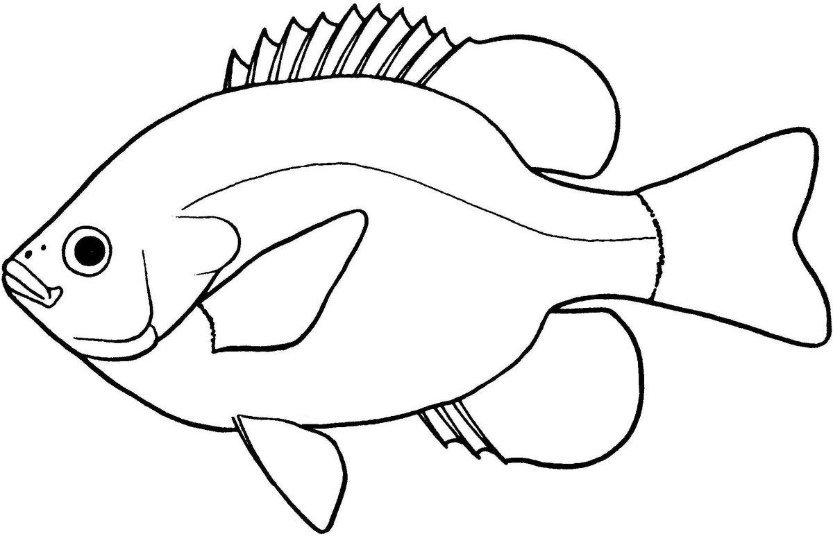 картинка рыбы нарисовать младшим