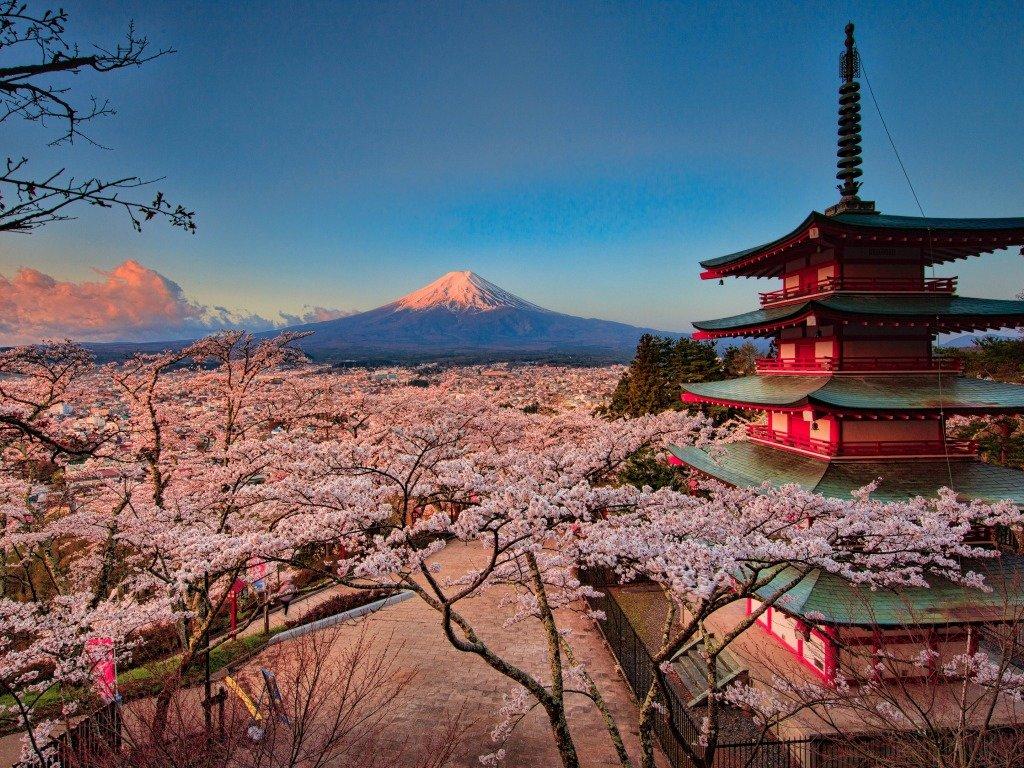 кошкин япония картинки фото высокого качества надеть