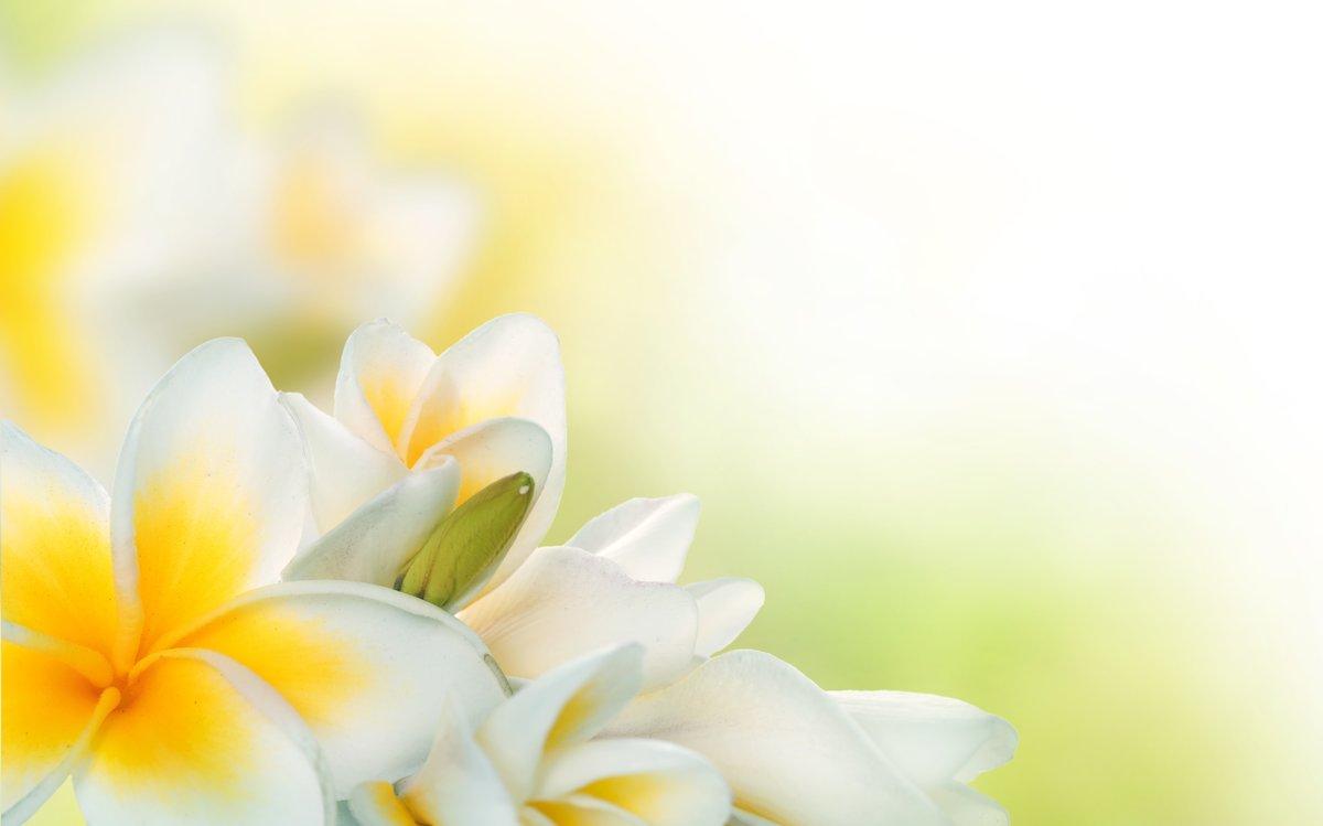 Красивый фон для поздравления с цветами