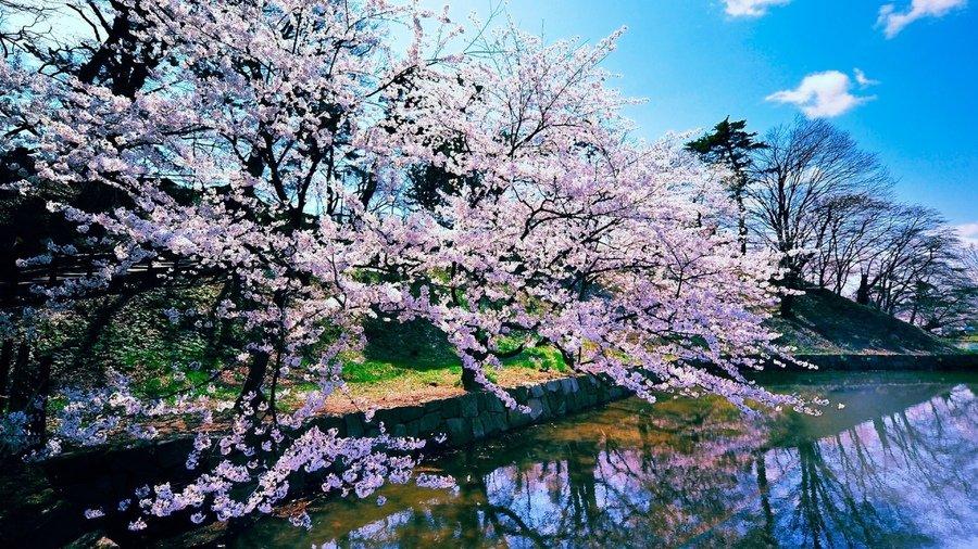 для фото весна природа хорошего качества дороже мотоцикл тем