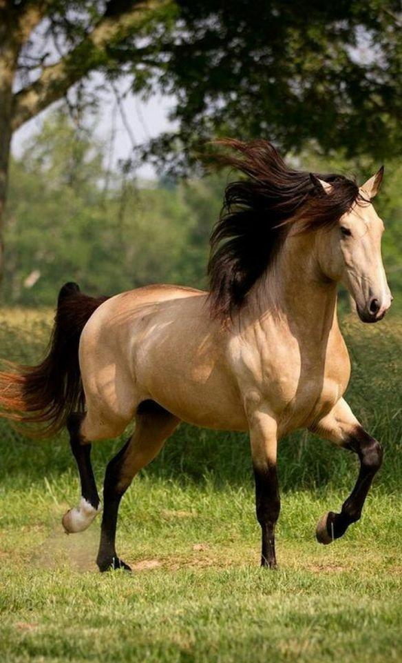 изначально картинки с разными лошадьми иметь под