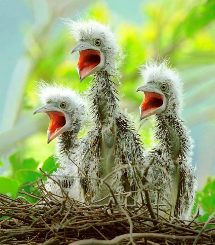 Новогодняя открытка, смешные животные и птицы