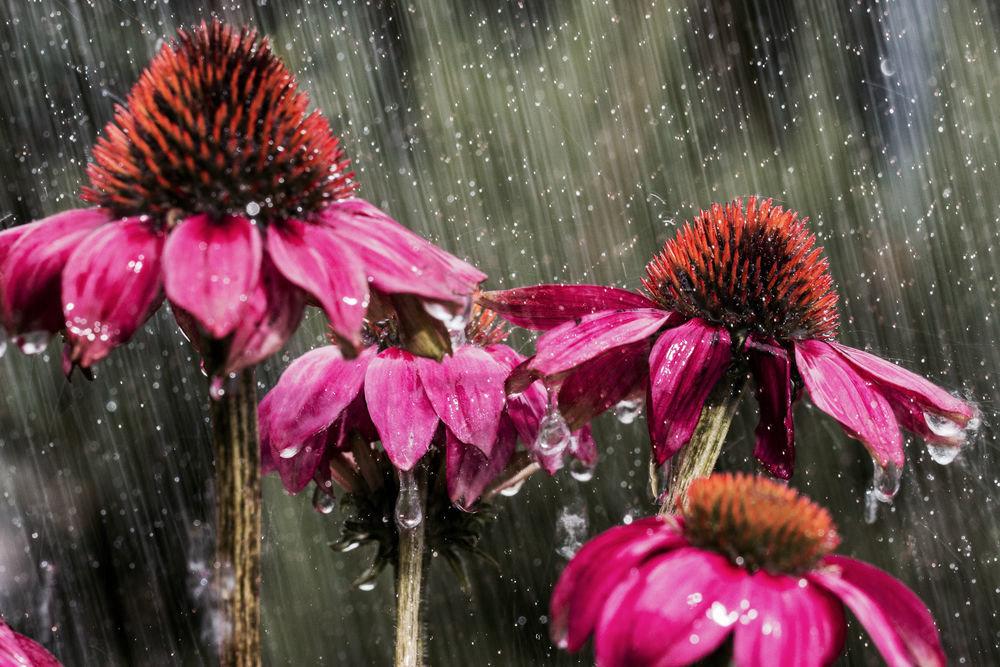 Фото красивых цветов и дождь время занятия