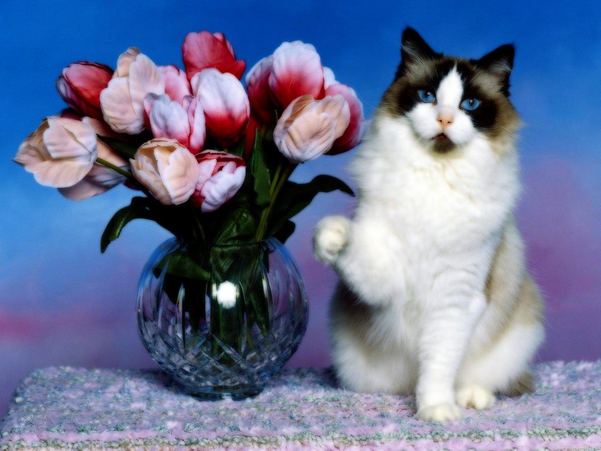 Для открыток, открытки с цветами и котятами красивые