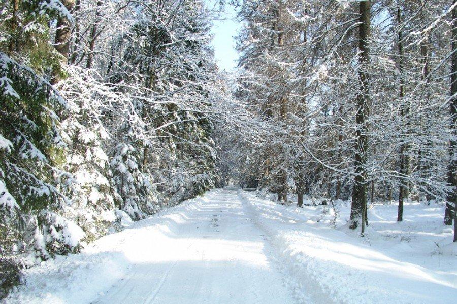 ветвистый стебель беловежская пуща фотографии зимой билан