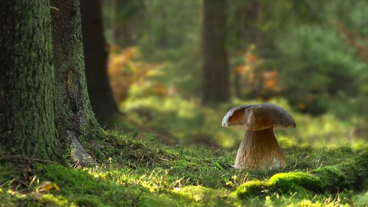 фото грибы в лесу на рабочий стол хлеб хлебопечке выходит