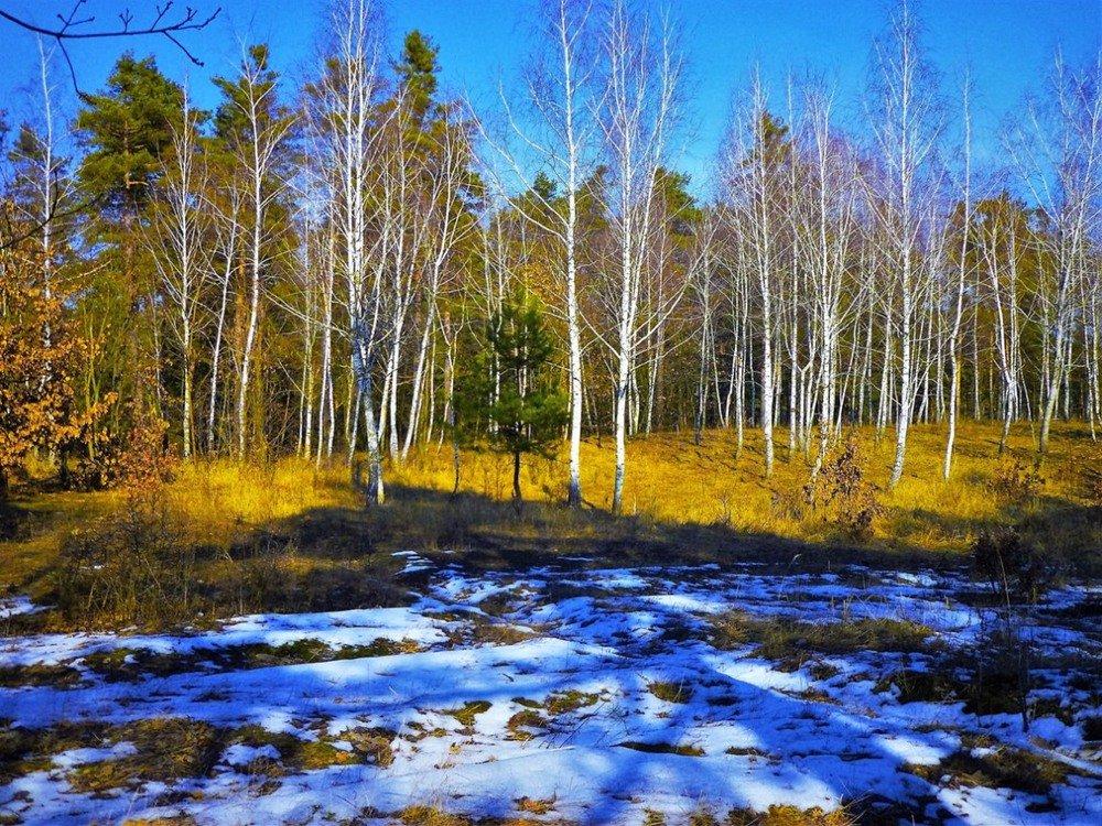 сорта фотографии весеннего леса общий